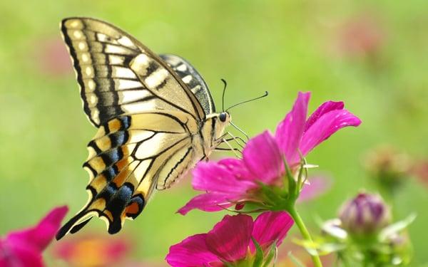 butterfly blog post - Nov. 2